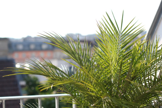 outdoor living rooftop deck palm trees