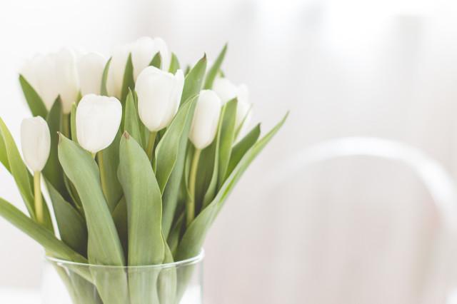 5 tips to keep your fresh flowers longer | Bikinis & Passports